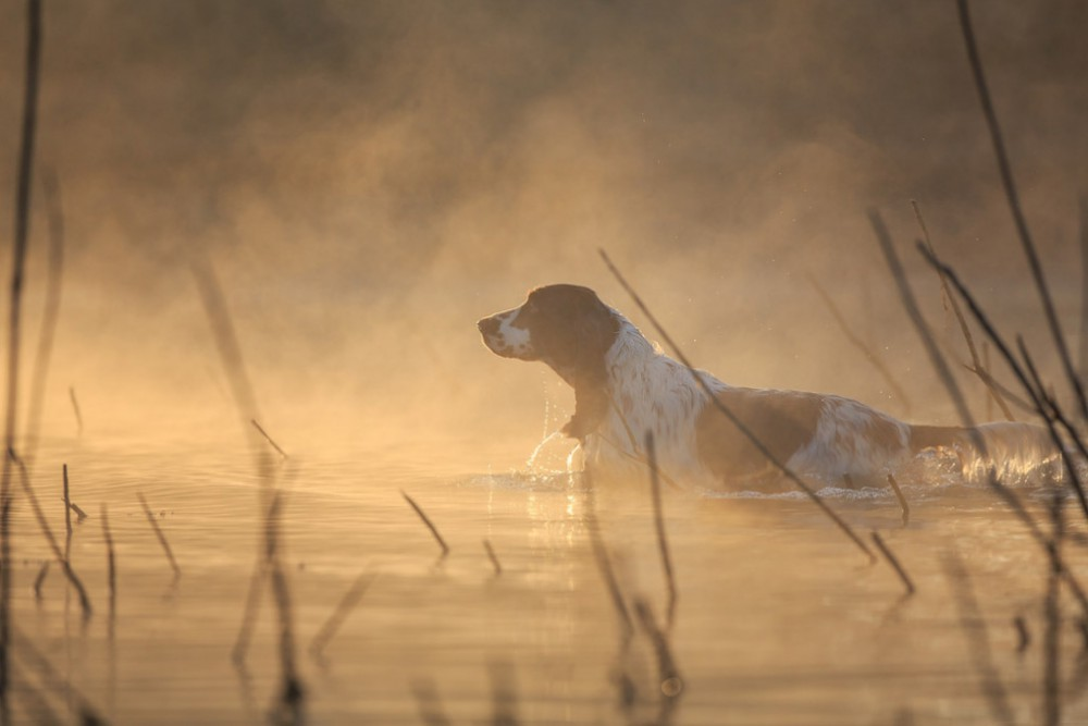 Абсолютным победителем конкурса Dog Photographer of the Year 2015 стал фотограф из России