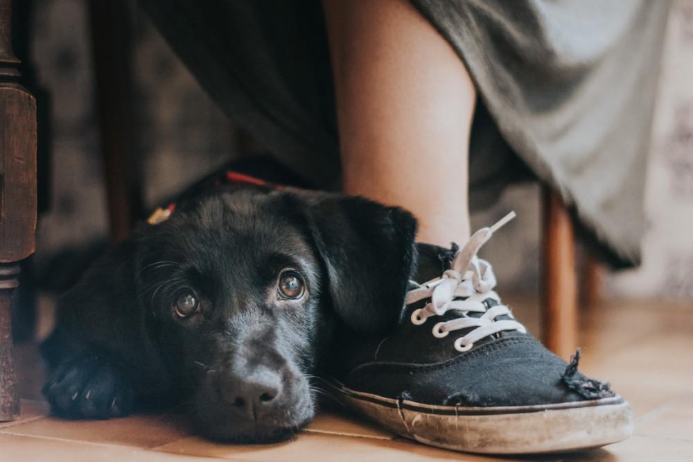 Фотограф из России – в числе победителей международного конкурса Dog Photographer of the Year 2017
