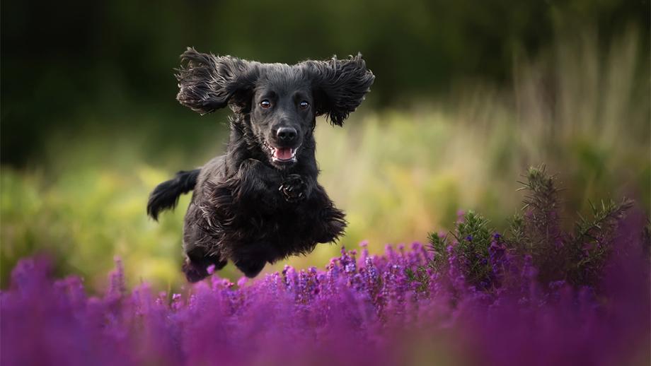 Конкурс Dog Photographer of the Year 2019. Продолжается прием работ