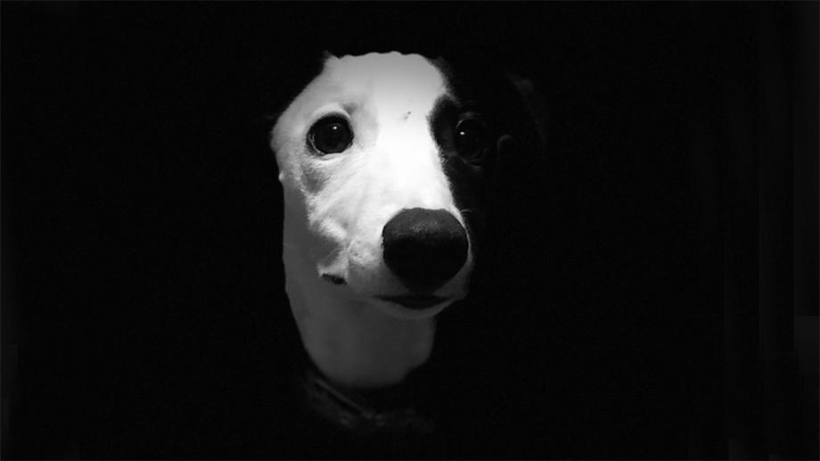Подведены итоги фотоконкурса Dog Photographer of the Year 2018