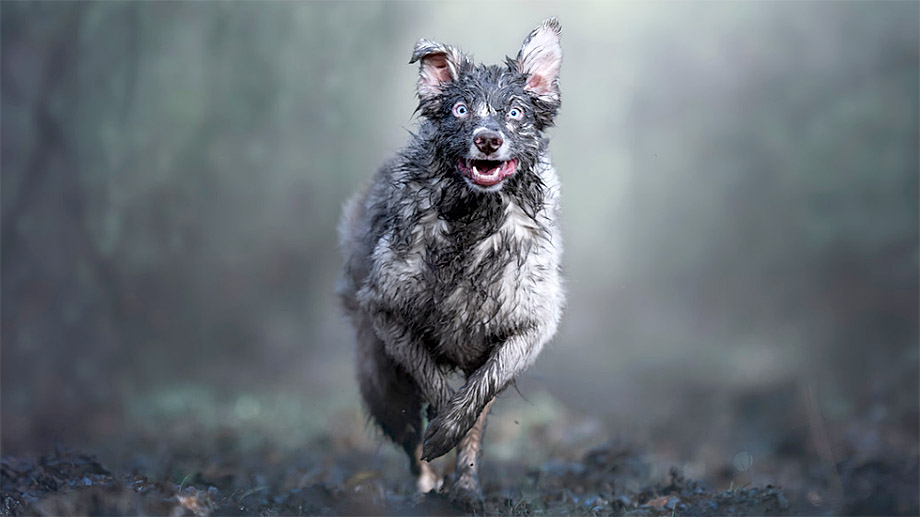Три фотографа из России стали призерами конкурса Dog Photographer of the Year 2019