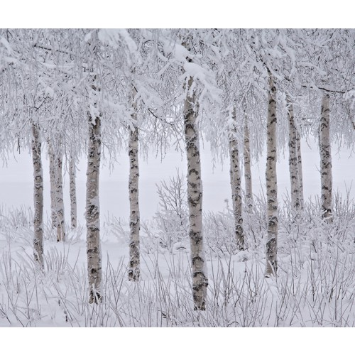 Jon Martin (Великобритания). ТОП-101 International Landscape Photographer of the Year 2015