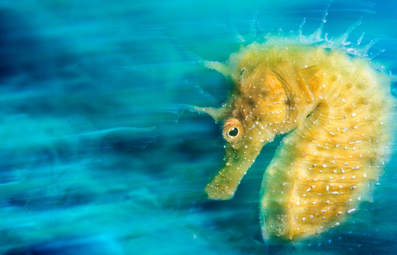 Среди победителей конкурса подводной фотографии UPY – фотограф из России