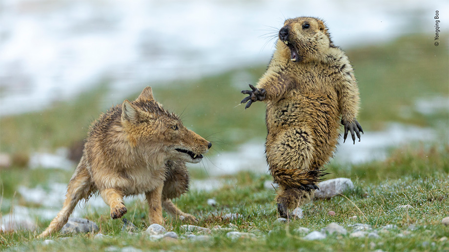 Wildlife Photographer of the Year открыл прием работ в 56-й раз
