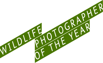 Конкурс Wildlife Photographer of The Year 2015 – открыт прием работ