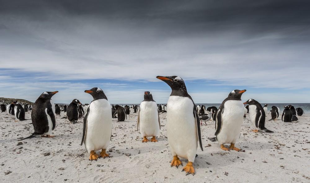 Объявлены финалисты конкурса National Geographic Travel Photography