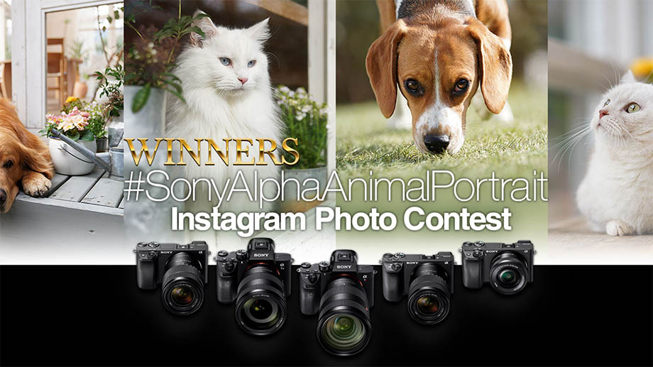 Российский фотограф – в числе победителей конкурса #SonyAlphaAnimalPortrait