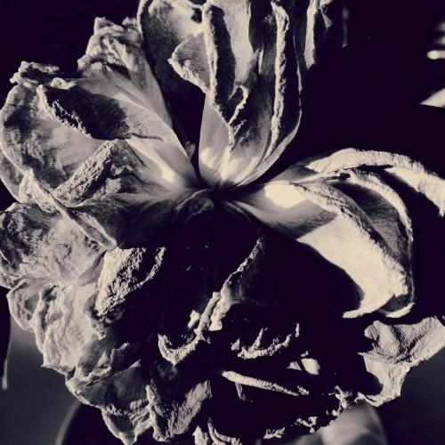 Dorit Kerlekin (Германия). 2-е место в категории Цветы. Photography Awards 2015
