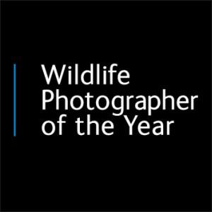 Русский фотограф Андрей Гудков вошел в финал конкурса Wildlife Photographer of the Year 2015