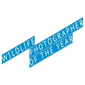 Подведены итоги конкурса Wildlife photographer 2015