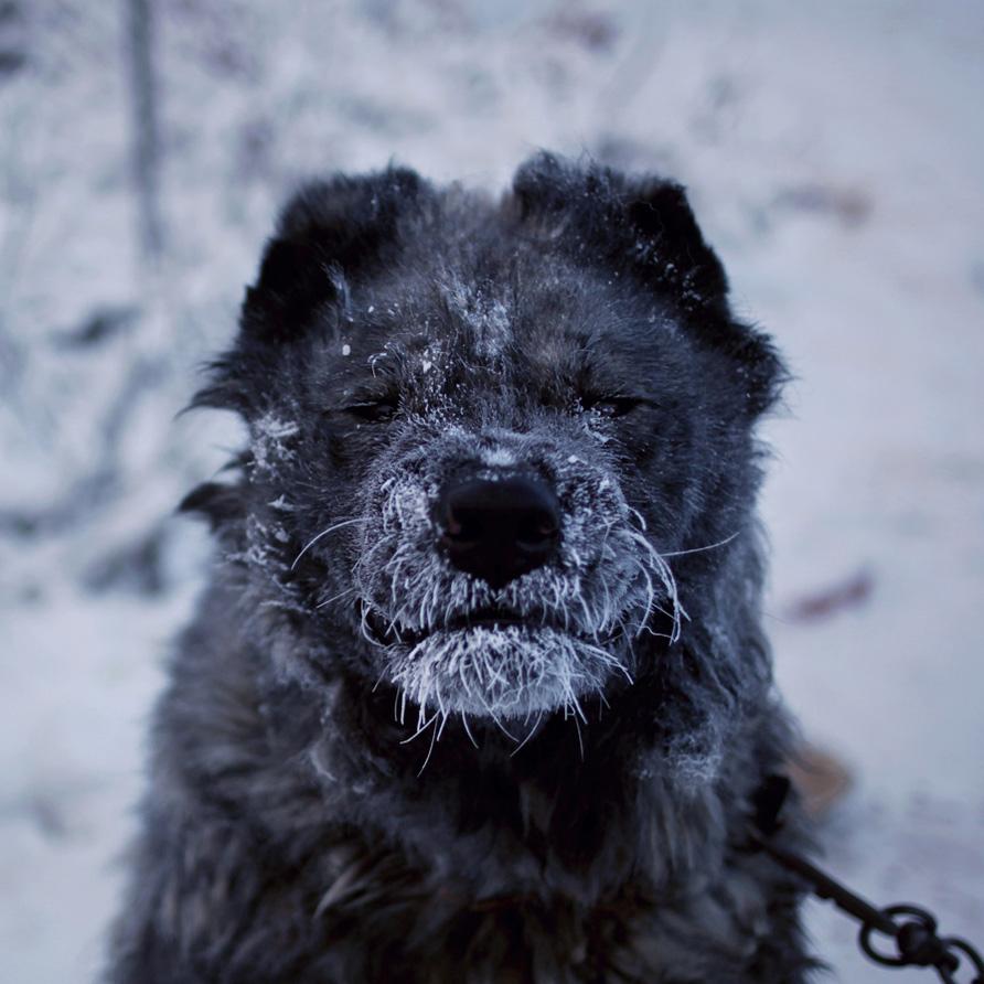 Amos Chapple. Фотографии из Оймякона - самого холодного места на Земле