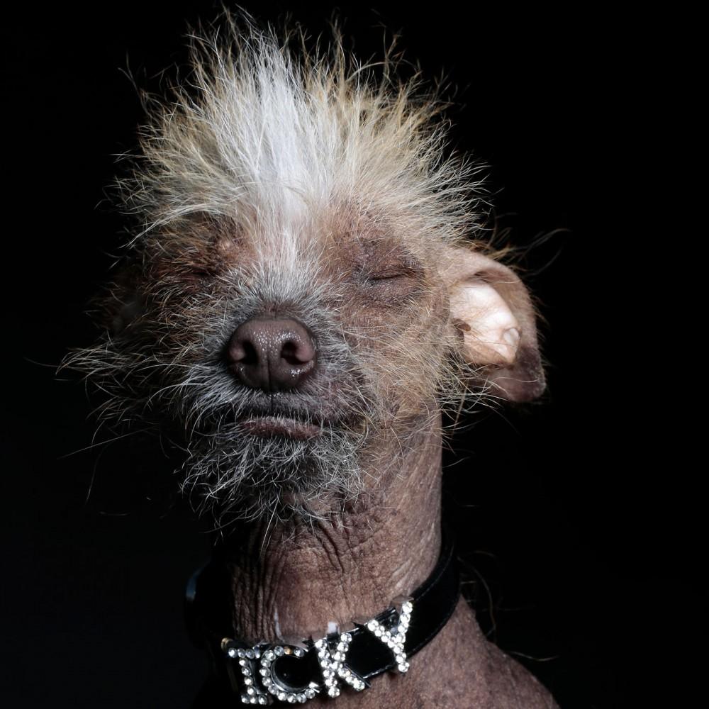 Ramin Rahimian. Портреты самых страшных собак в мире