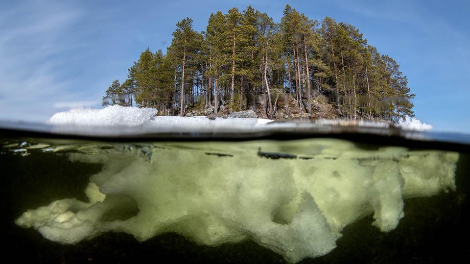 Виктор Лягушкин: «Секреты успешной подводной фотографии». Урок, часть 3