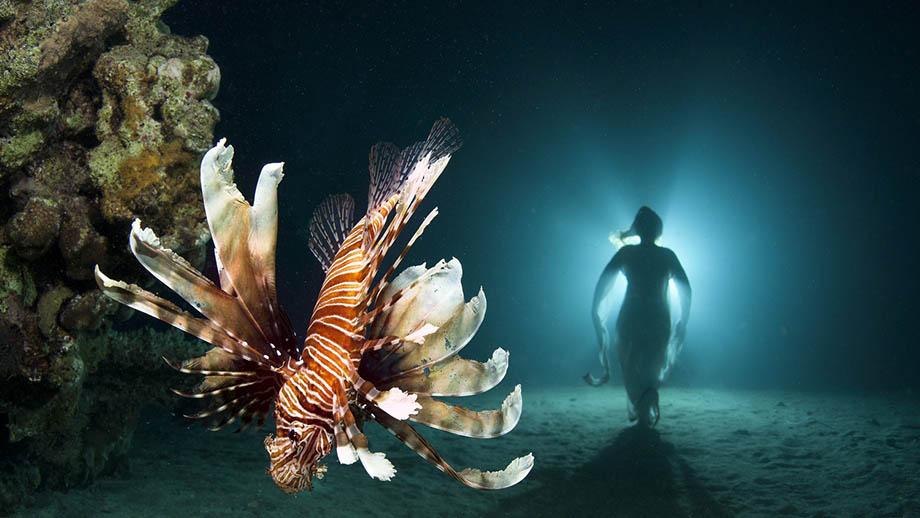 Виктор Лягушкин: «Ошибки в подводной фотографии и как их избежать». Урок, часть 4