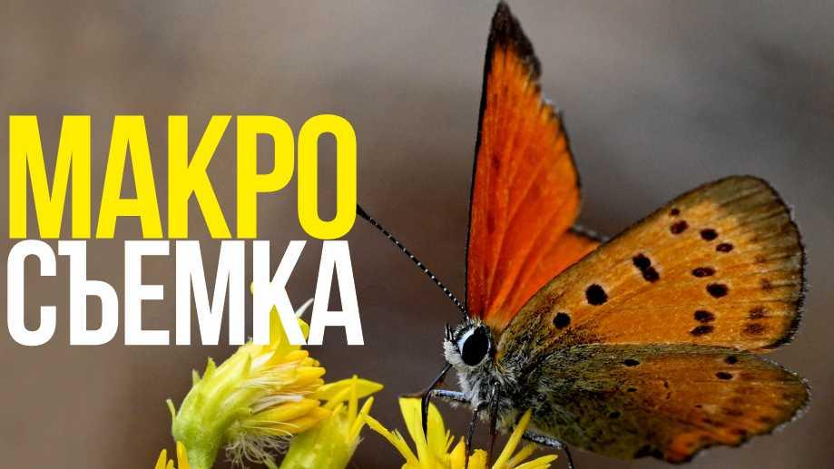 Макросъемка   Nikon NIKKOR Z MC 105mm f/2.8 VR S