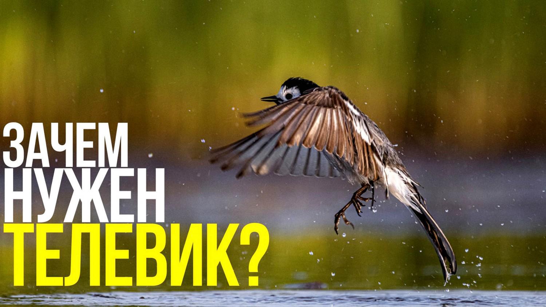 Как снимать птиц? | Фотосъёмка на природе с Canon RF 600mm F11 IS STM