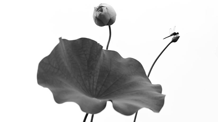 Итоги «Black & White 15» | IGPOTY 2021
