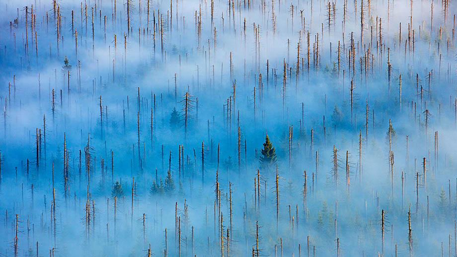 Фотоконкурс Nature Photographer of the Year 2021 открыт для приёма работ