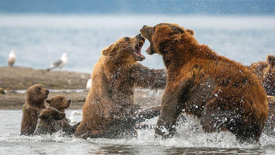 Дикая природа России 2021 | National Geographic Россия
